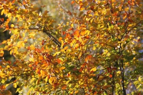 Usedomer Wildwochen 2012 - Herbstlaub