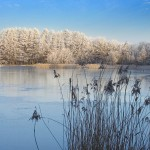 Wolgastsee im Winter