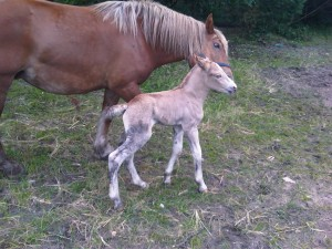 Pferdenachwuchs in der Hotel- & Ferienanlage Waldhof