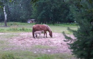 Pferdenachwuchs im Waldhof