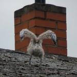 Möwenbaby auf dem Dach, Ahlbeck