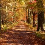 Herbstwald am Wolgastsee Insel Usedom