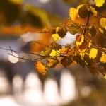 Goldener Herbst auf der Sonneninsel Usedom